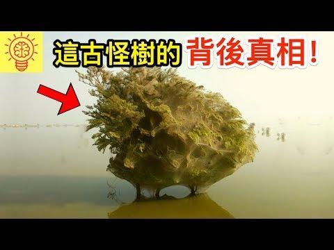 災難後會跟著出現的恐怖鬼樹!需立即逃命!