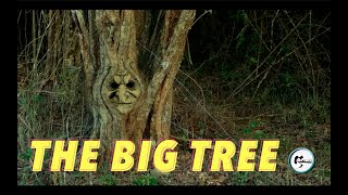 BIG TREE / Funny Video / Comedy Short