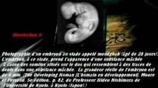 Ce que dit le Coran sur le développement embryonnaire humain