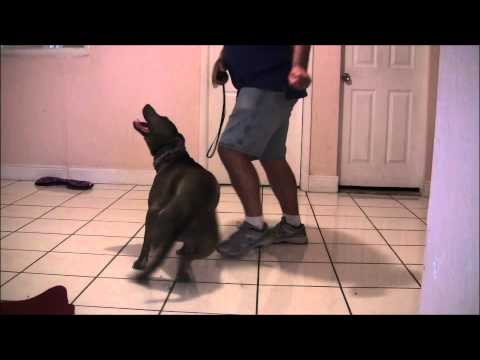 "Extremely difficult ""High level"" dog tricks!"