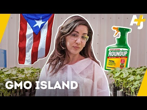 What is Monsanto doing in Puerto Rico? | AJ+