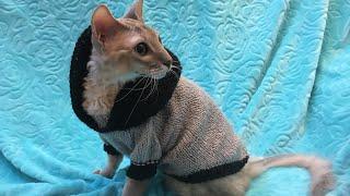 Мои коты/ Свитер для котов и собак мелких пород/ Кофта вязаная спицами для животных/ Коты - модели/