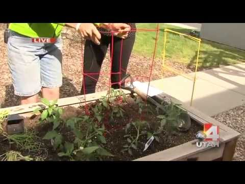 Square Foot Gardening | Organic Gardening | Salt Lake City