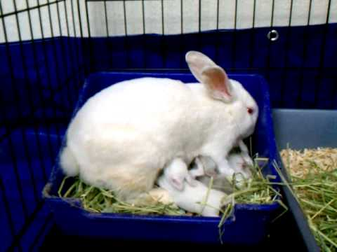how to raise baby bunnies without the mother