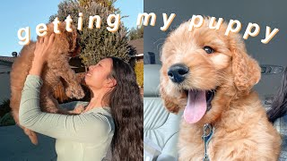 I GOT A GOLDENDOODLE PUPPY!! FIRST 24 HOURS WITH MY FIRST PUPPY