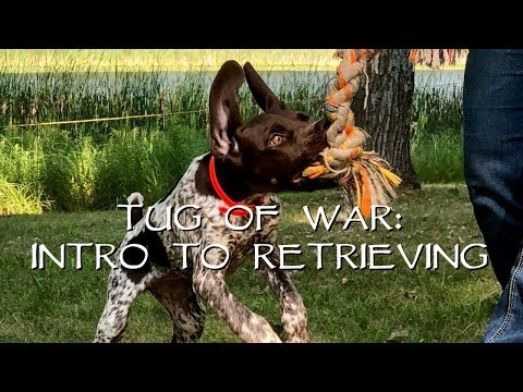 Teach Your Puppy To Retrieve