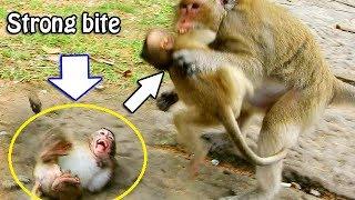 FULL TERRIFIED FULL HURT| Big Bertha bite poor baby Lola very strong,Pity Lola cry so hurt full body