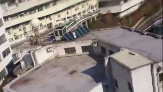 岡山理科大学にあるさざんかです.