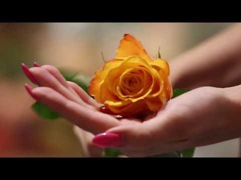 Желто-красные розы 40 см (Кения)