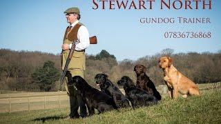 "Puppy Gundog Training ""the Basics"" Sam"