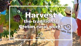 Harvest | Creta Maris 2019