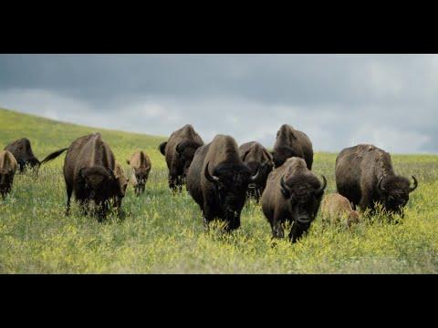 Travel South Dakota - Custer State Park 2019