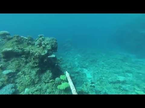Chasse sous marine à Ouvéa (Nouvelle Calédonie) - shark attack!