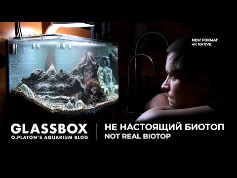 Видео: НЕ настоящий биотоп. Not real biotop. Glassbox