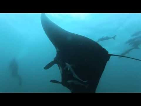 Scuba Diving in Cook Island - Tweed Heads, NSW, Australia