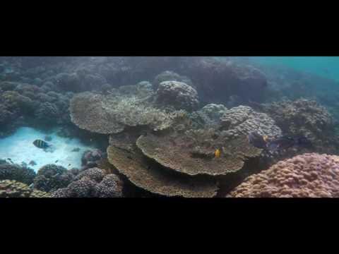 Oman, Ad Dimaniyat Island (جزيرة الديمانيات)