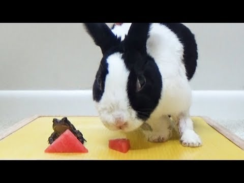 Frog and Rabbits Adventure