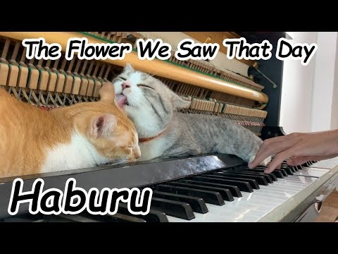 The Flower We Saw That Day | Happy Weekend ♥️♥️♥️ (Interesting At The End Of The Video)