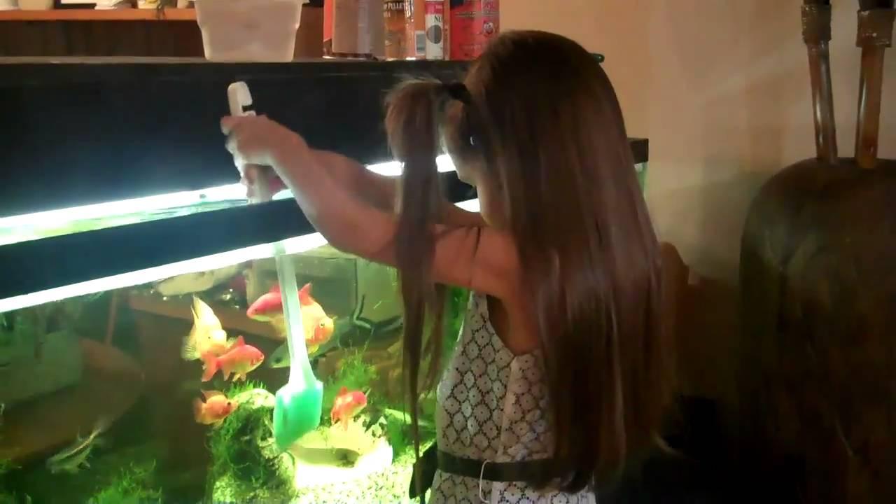 How to clean a fish tank aquarium remove algae fish for Fish tank algae remover