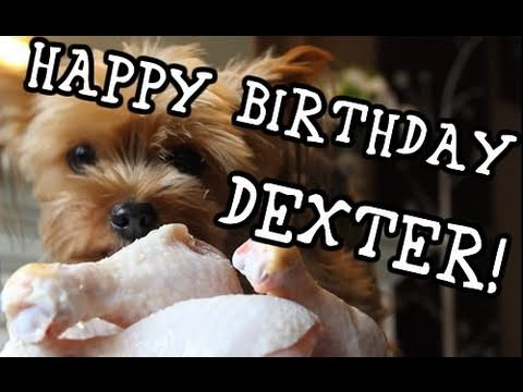 Dog Birthday Wishes Happy Dexter