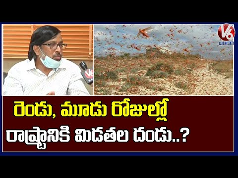 ICAR Dr YG Prasad Face To Face Over Locust Attack In India    V6 Telugu News