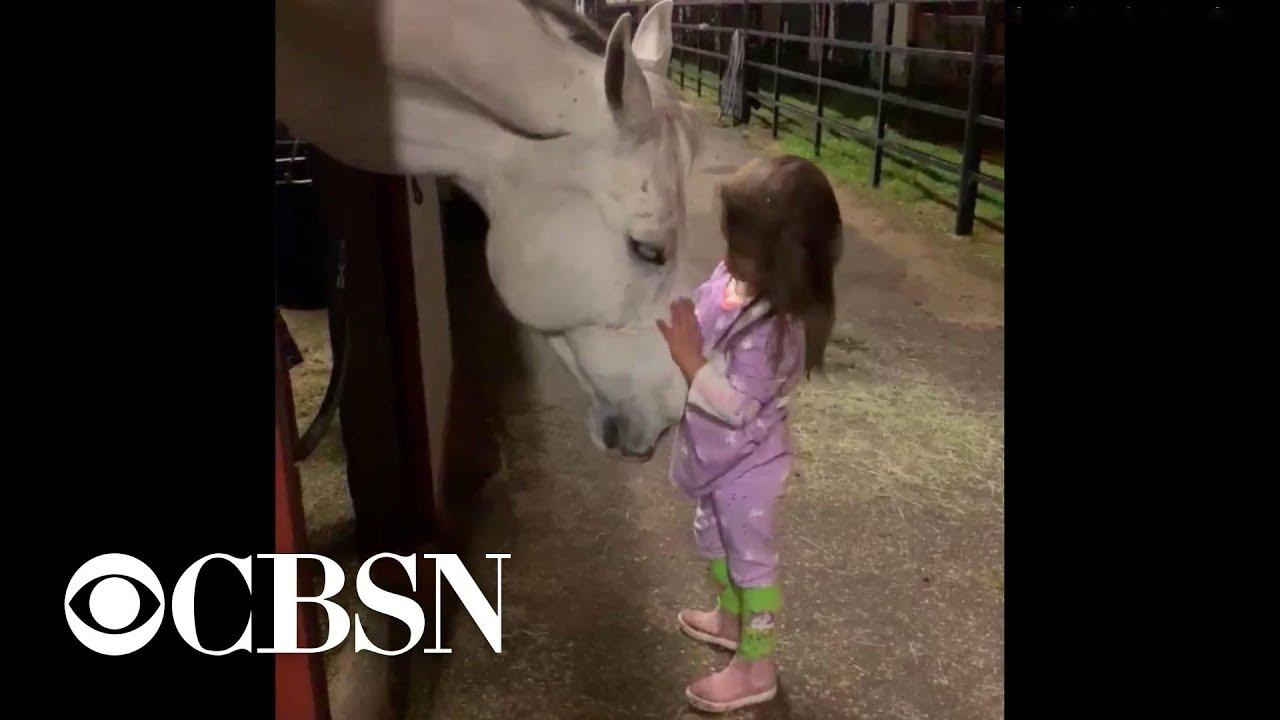 Децата  и животните се одличен тандем: Девојче кое гали и смирува коњ стана вирален хит