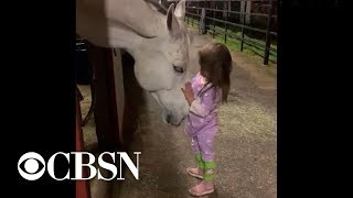 Little Girl Soothes Horse In Viral Video