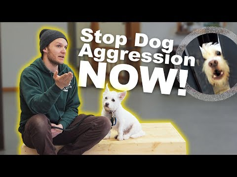 How to STOP DOG AGGRESSION- Dog Training with America's Canine Educator