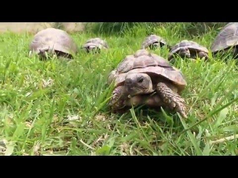 Meet the resident GSPCA tortoise enjoying the Guernsey Spring sunshine