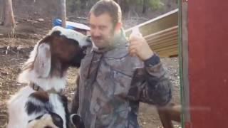 Животные поют Seven Nation Army