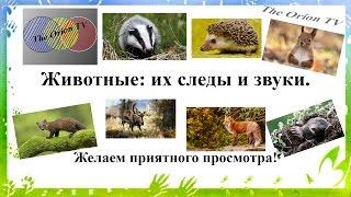 Животные: их следы и звуки
