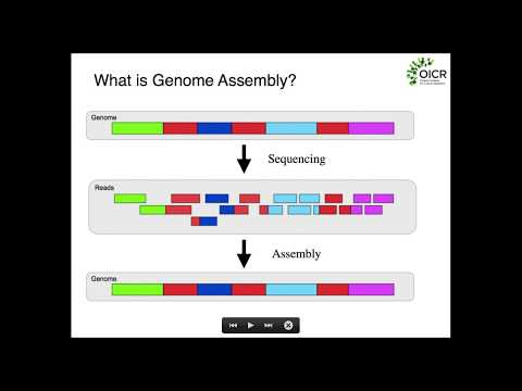 Fundamentals of Genome Assembly