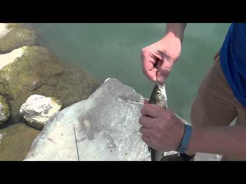 Catching A Fish On Lake Trasimeno