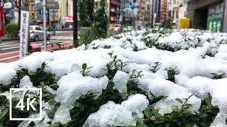 Tokyo Ngày Tuyết Rơi - Tuyệt đẹp và lãng mạn