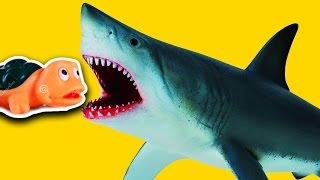 Злые Акулы нападают! Приключения Акул. Видео для детей - Игрушки Акулы. ДИНОЗАВРЫ. Игрушки ТВ