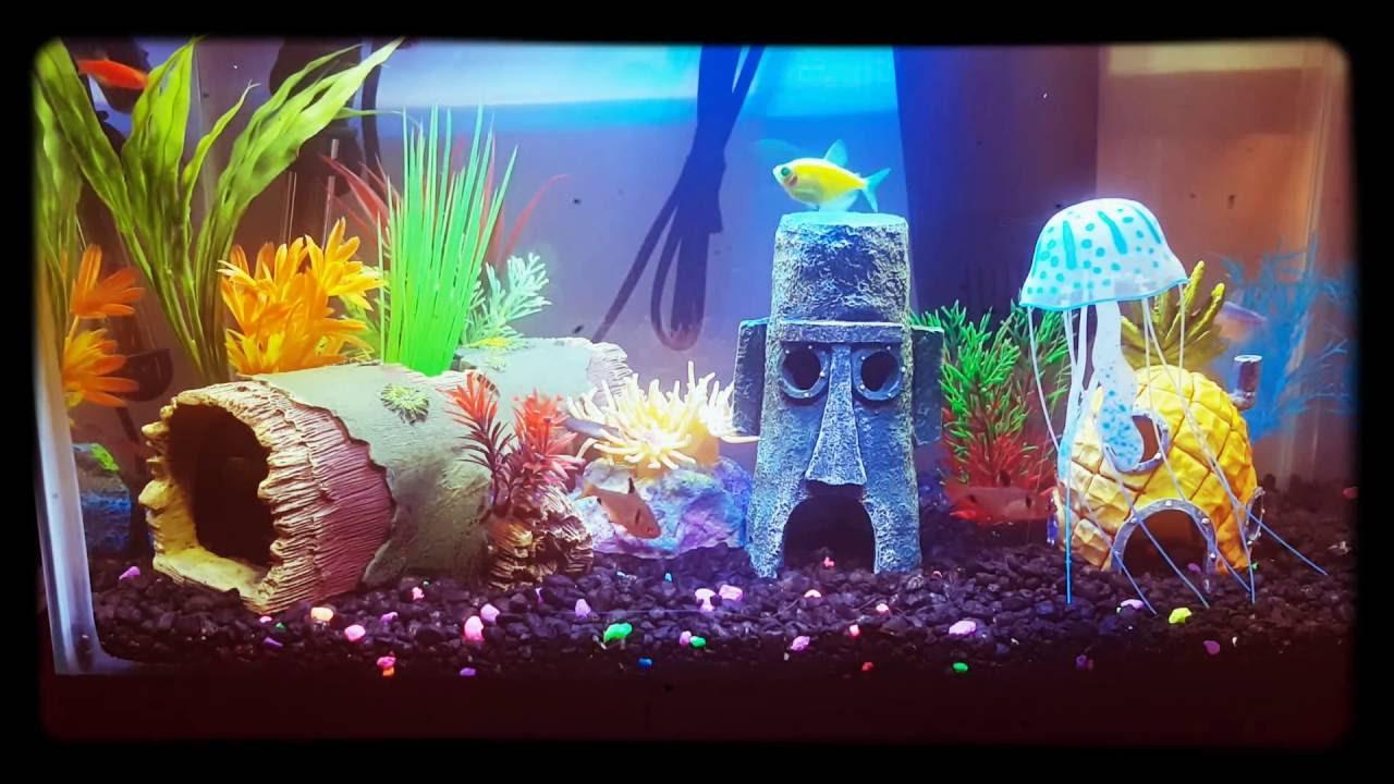 Freshwater aquarium fish rainbow shark - Best Freshwater Aquarium 2016 2 Betta With Other Fishes Like Glow Fish And Rainbow Shark And Tetra