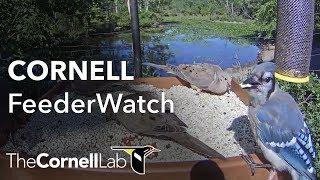 Cornell Lab FeederWatch Cam at Sapsucker Woods thumbnail