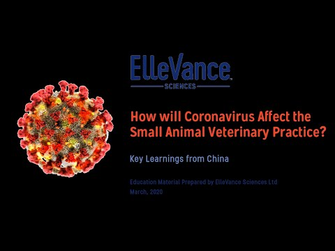 How Will COVID19 Affect Small Animal Veterinary Practices? China Experience |  ElleVance Sciences