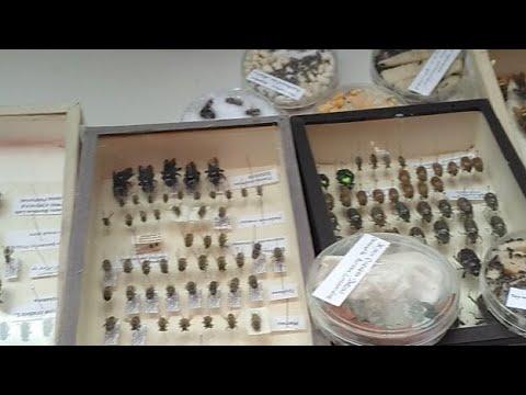 Реферат биология пауки и насекомые