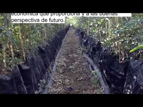 Planta de pistacho injertada vivero youtube for Viveros de plantas