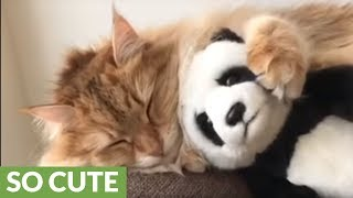 Cat loves to cuddle stuffed panda