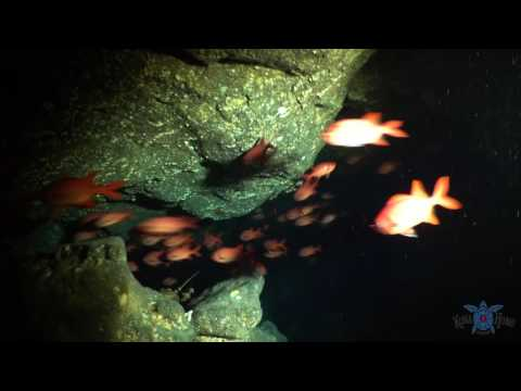 Scuba Diving Kona, Hawaii - Lobster Cave   Kona Honu Divers