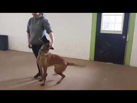 Hooka - Advanced Tricks Dog