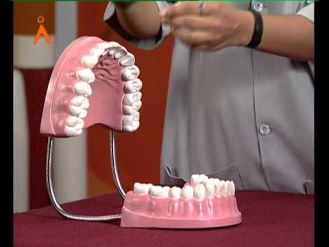 Human Teeth: Simple explanation (Kannada)
