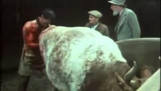 3 эпизод, 2 сезон, «O всex сoздaнияx — бoльшиx и мaлыx», 1978. Джеймс Хэрриот.