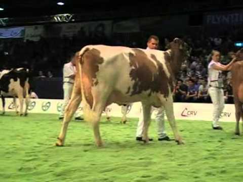 Holstein Master Sale Nr. 05