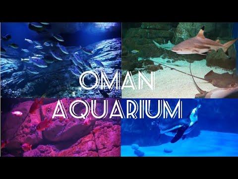 Oman Aquarium, Mall of Muscat, Middle East Biggest Aquarium,  SR COMMUNE-5