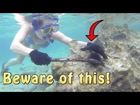 Survival Food: Sea Cucumber And Sea Urchin