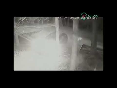 Неизвестный попытался силой затащить школьницу в автомобиль в Новой Ладоге