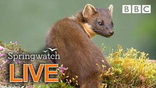 Cute wildlife cams 11 June Part 1  | BBC Springwatch